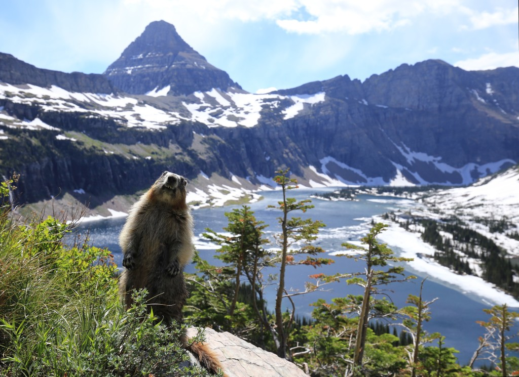 Winner: Curious Marmot posing in Front of the Hidden Lake in Glacier National Park. Photo by Tobias Klenze