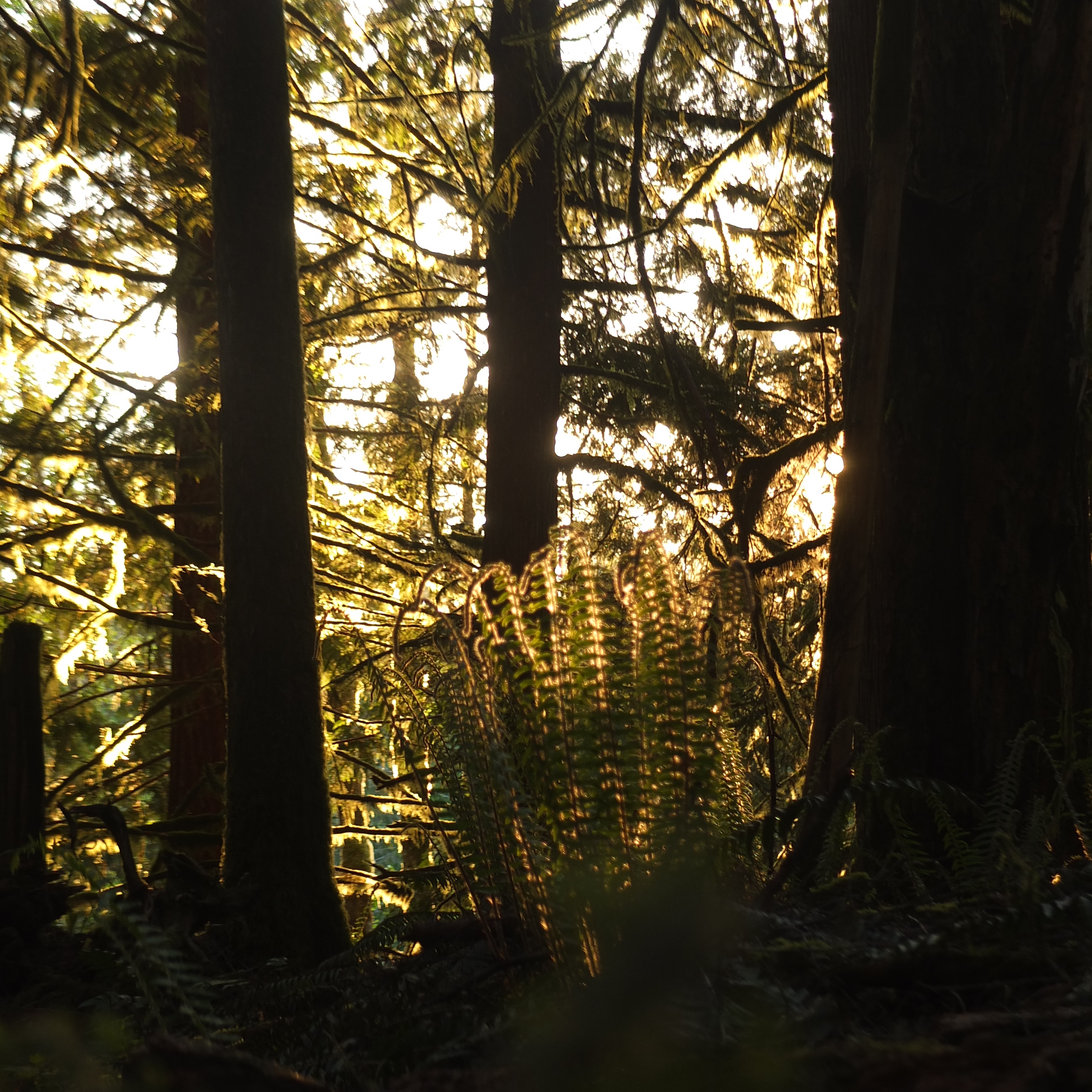 Beautiful evening light shines through the rainforest