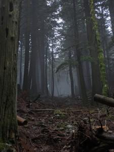 Creaky tree location