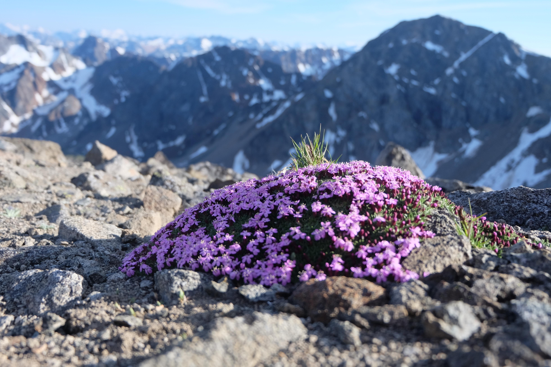 Flowers in a harsh environment. PC Elliott Skierszkan.