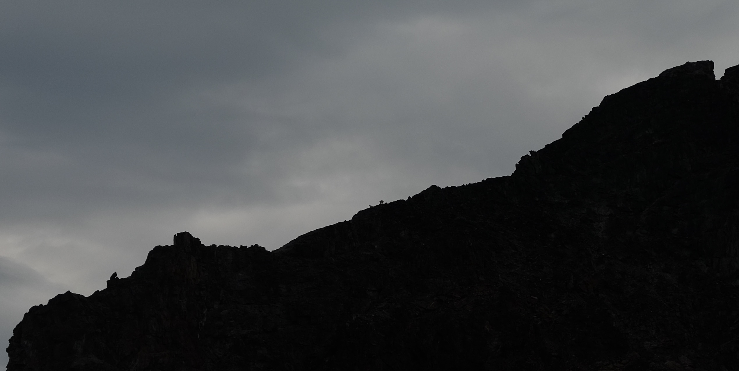 Mountain goats silhouetted on the ridge N of Truax.