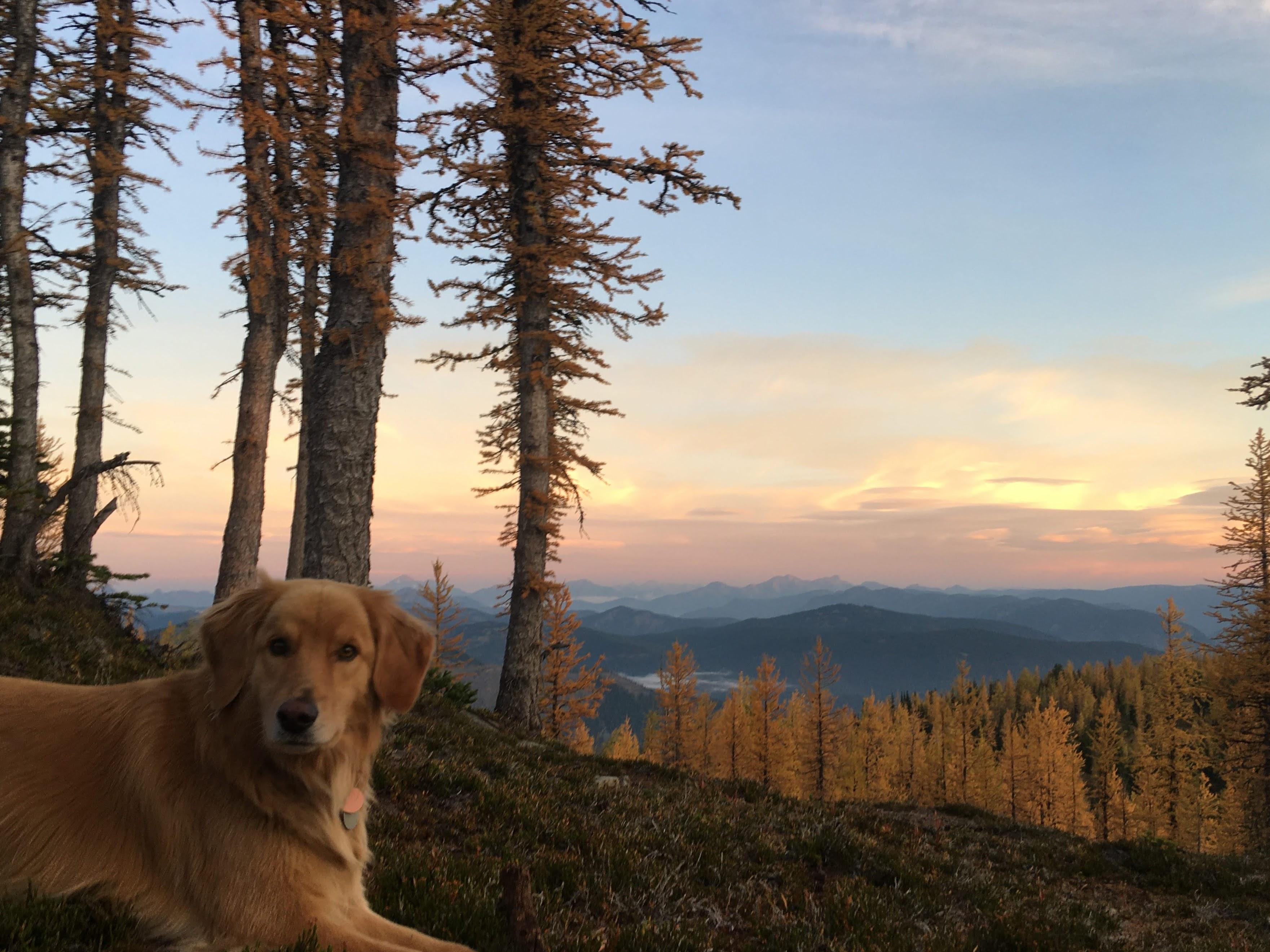 Calmed Buddy in the morning light. Photo by Melissa Bernstein.