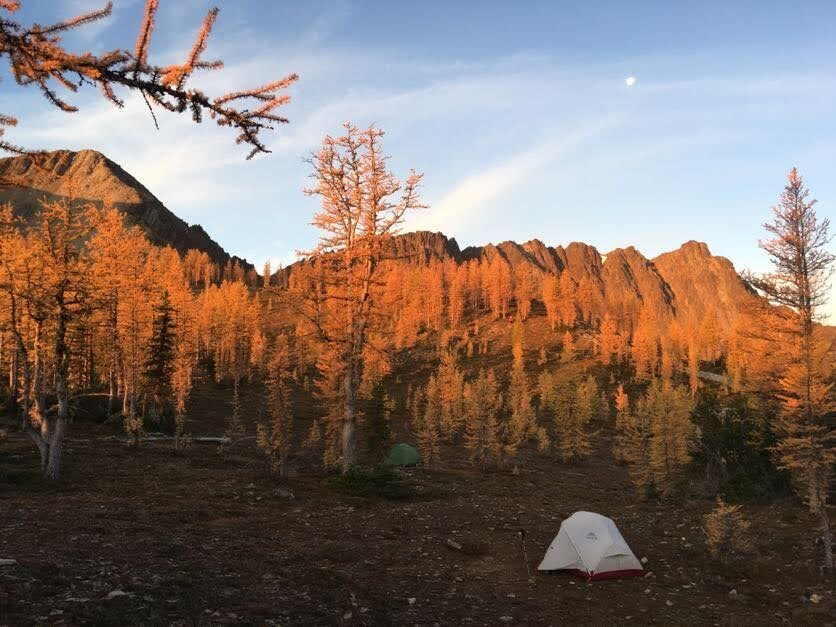 """Morning """"Golden Hour"""" on the Golden Larches. Photo by Melissa Bernstein."""