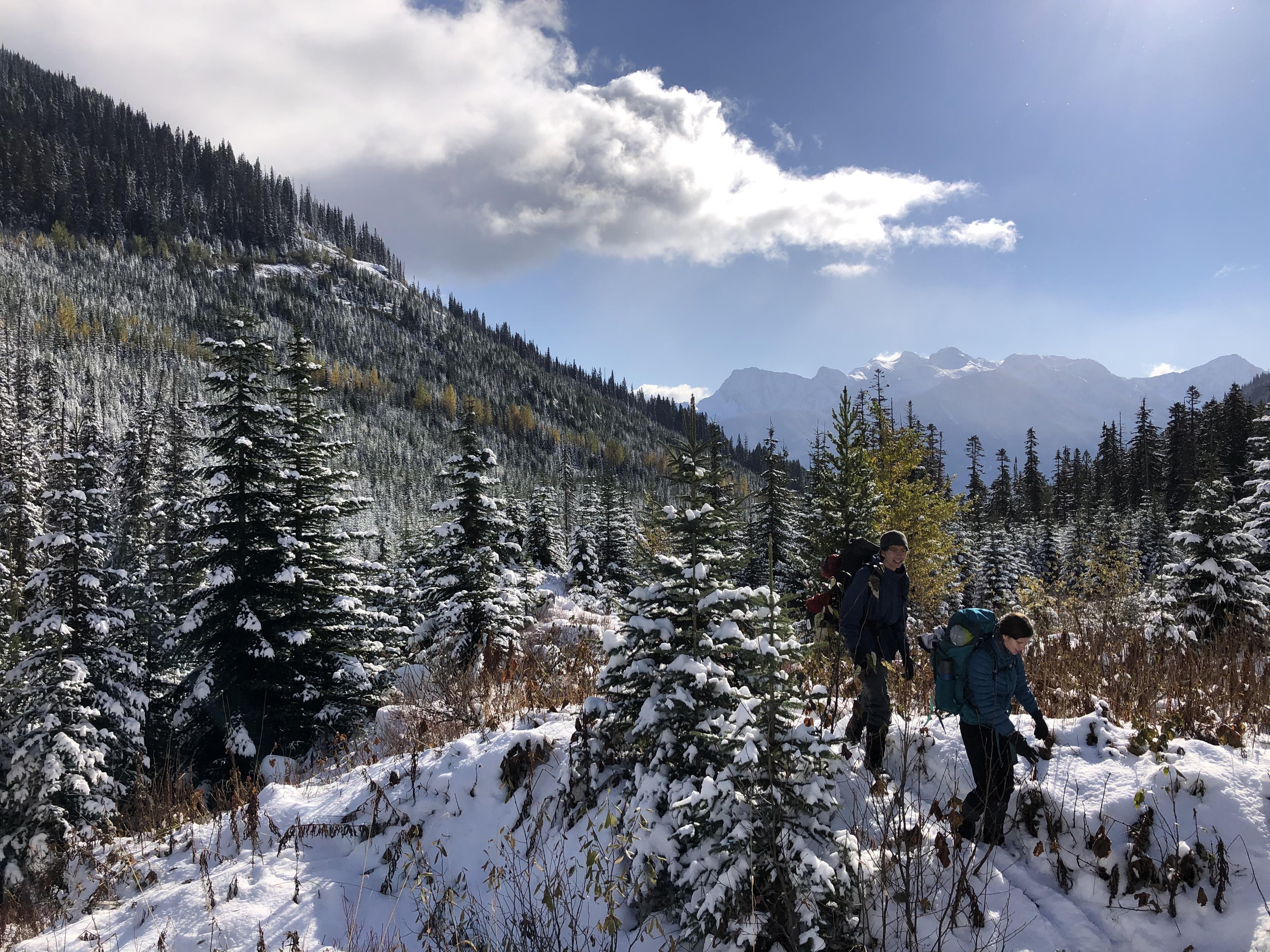 Slide alders and snow