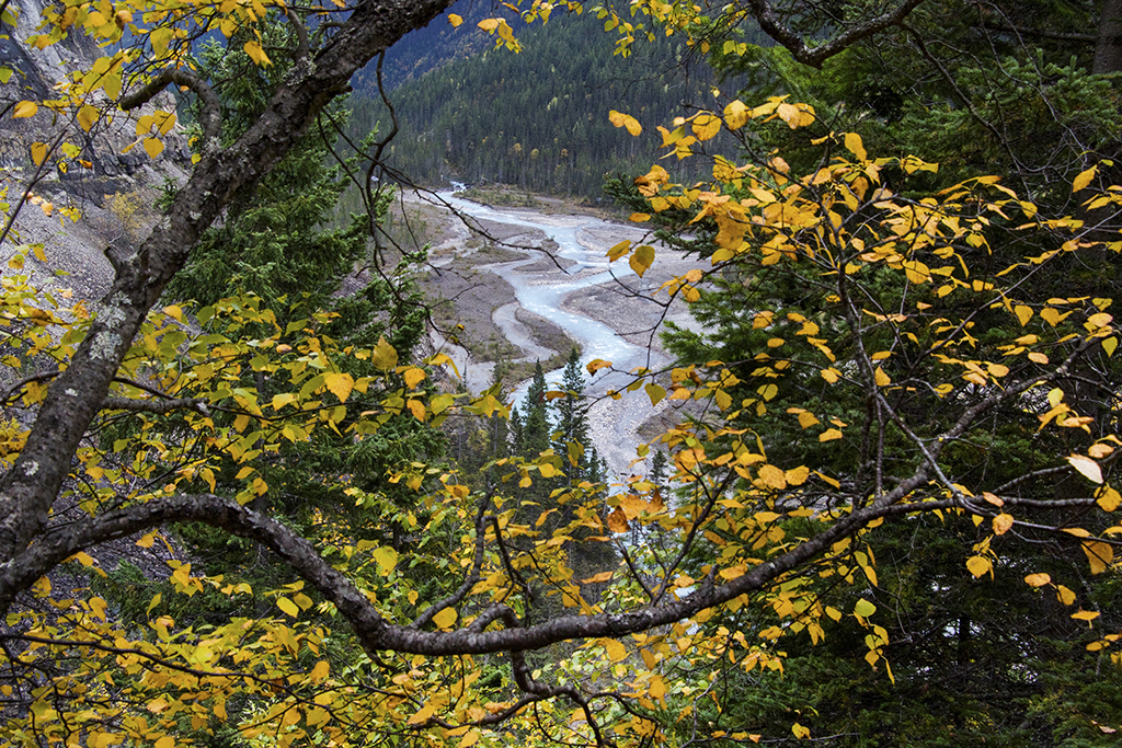 Robson River framed by the wonderful fall colors.