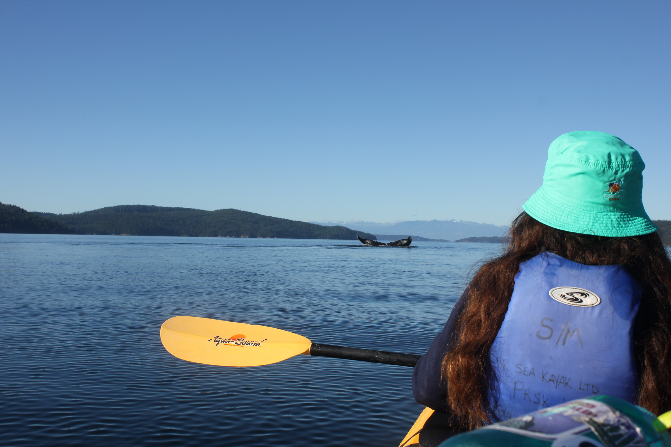 Little kayak meets big humpback whales.